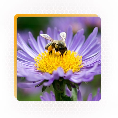 Beehively floral calendar
