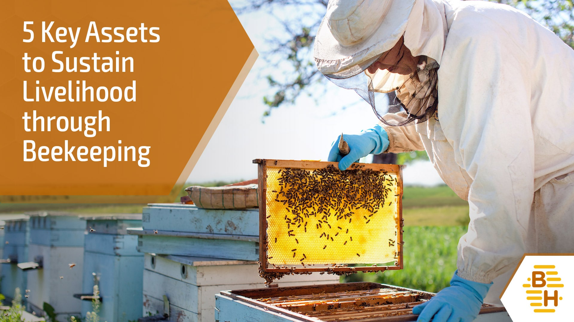 Blog 7 - 5 Key Assets to Sustain Livelihood through Beekeeping